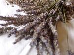 lavendar-2