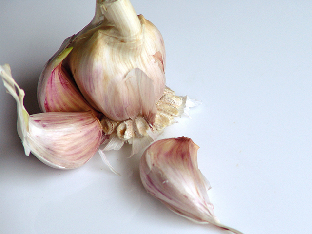 ROSE-GARLIC