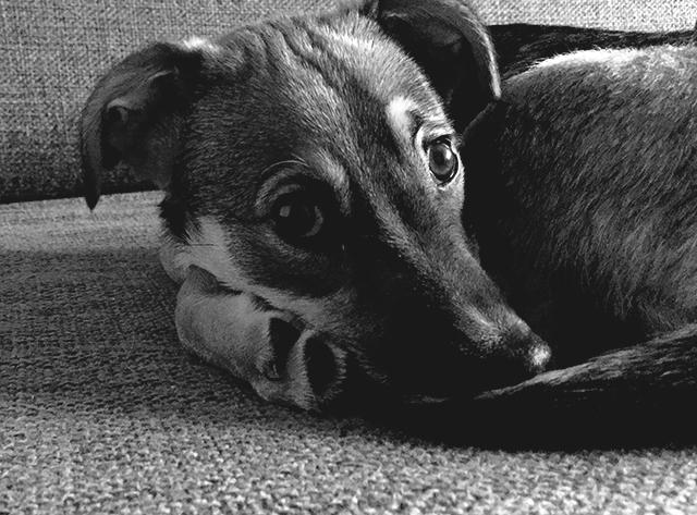 DOGS PRAYER 1